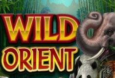 Online slot machines Wild Orient